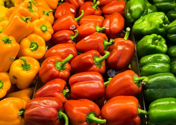 Rows of yellow, red and green peppers lined up